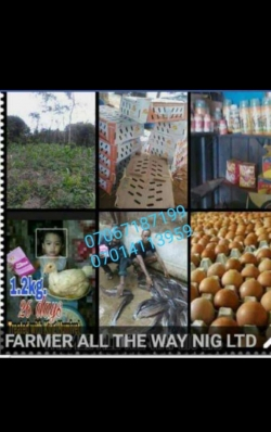Get Your Different Kinds Chicken and Turkey From Farmer all the way Nig.Ltd (WITH AMAZING BONUSES)